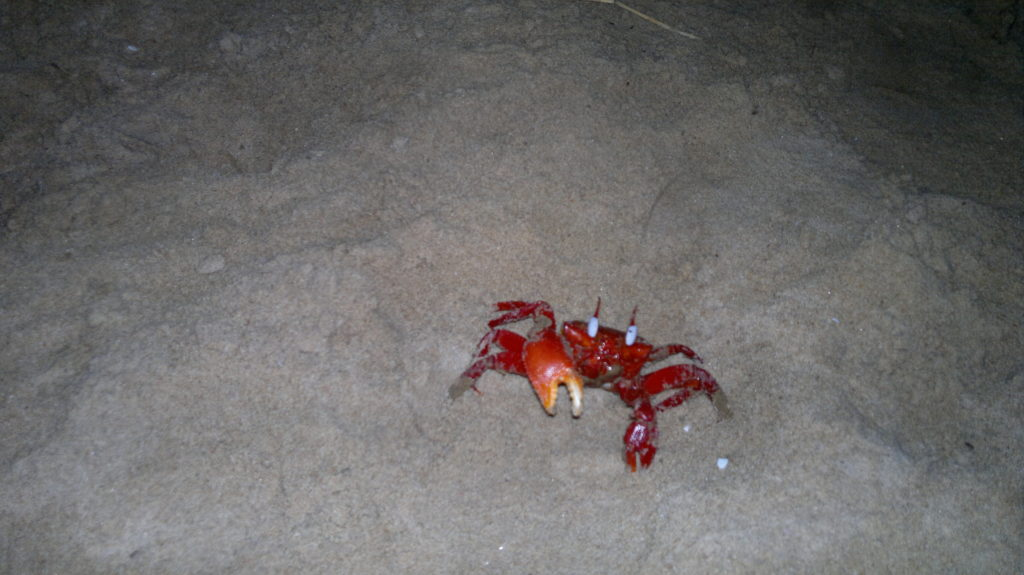 Crab!!