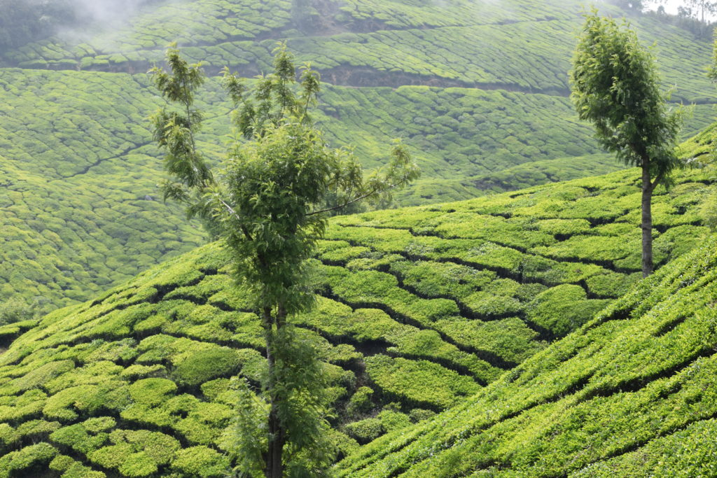 Munnar, Places to see