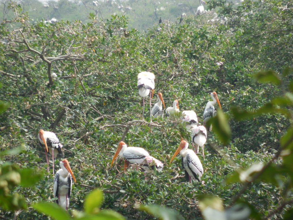 Vedanthangal Bird Sanctuary- Day trips from Chennai