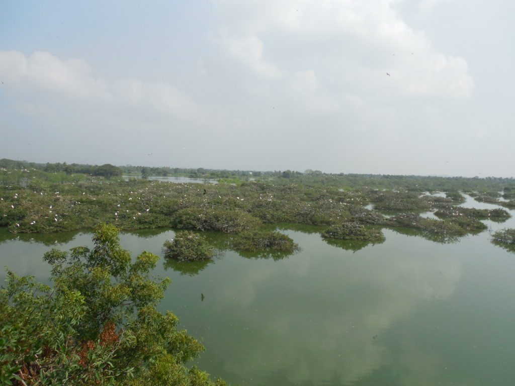 Vedanthangal Bird Sanctuary-One day trip from Chennai
